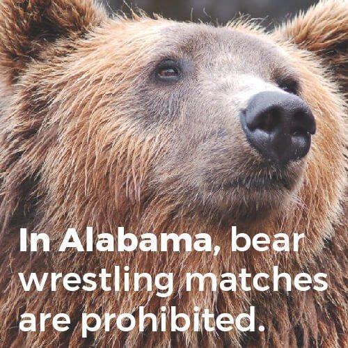 bear wrestling is illegal in Alabama